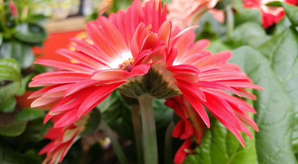 Blumen - Nahaufnahme